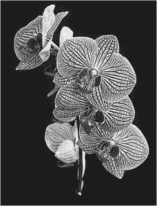 orchidee aanbrengen met lasertechniek